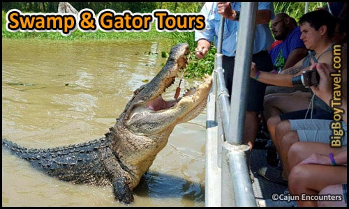 Top Day Trips From New Orleans, Best Side - Bayou Gator Swamp Tours