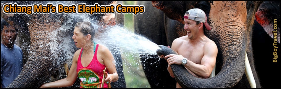Best Elephant Camps In Chiang Mai